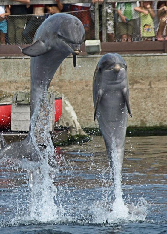 Dolfijnen -