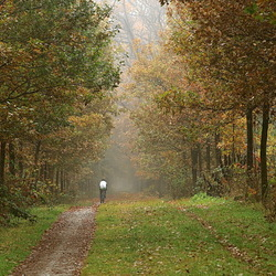 fietsend de herfst in