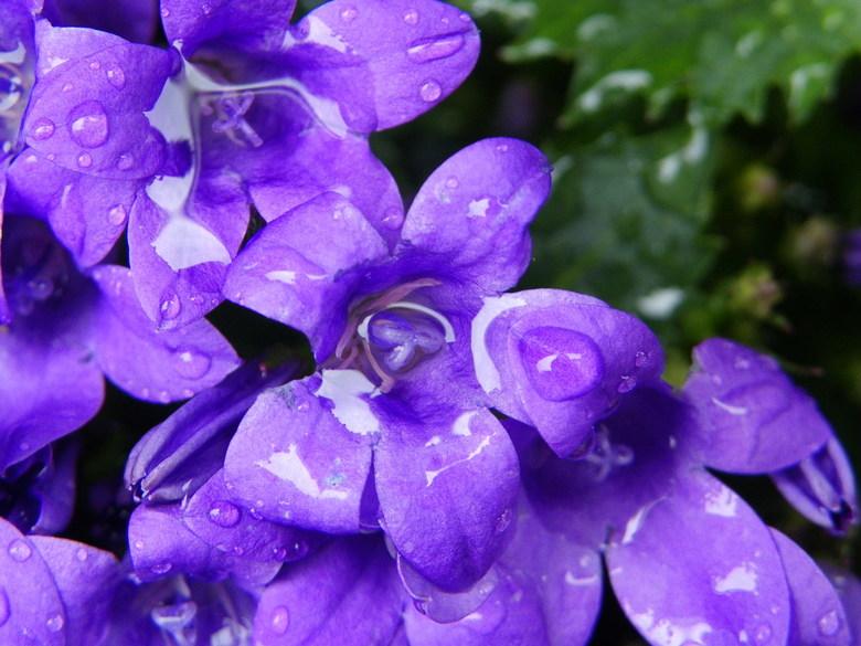 water bekken - na het sproeien van de planten in de tuin zag ik dit door de camera