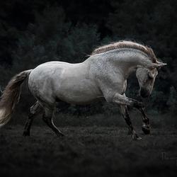 Spanish Pre Horse