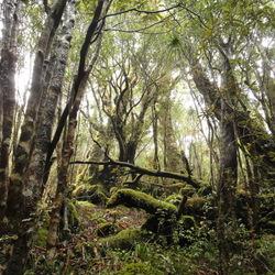 Nieuw Zeeland - Heaphy Track - Sprookjesbos