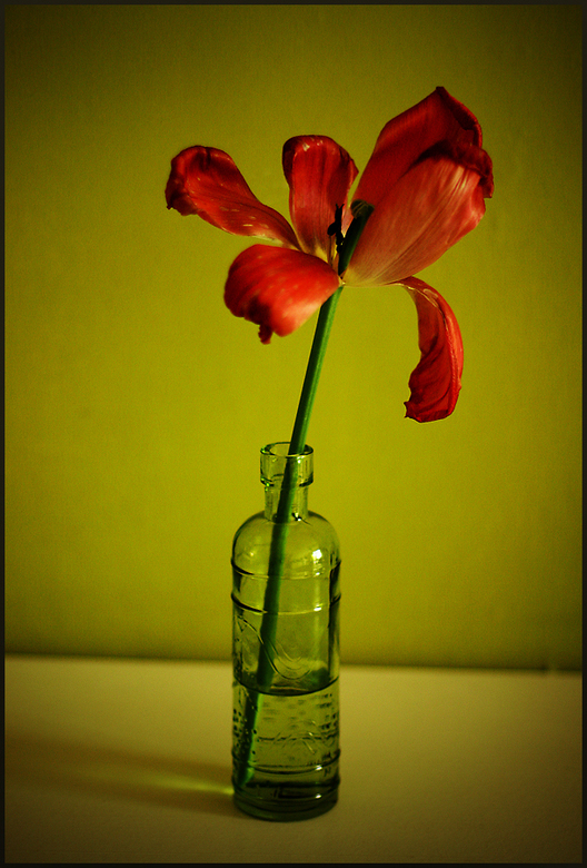Red & Green -