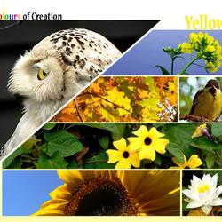 COC: Yellow