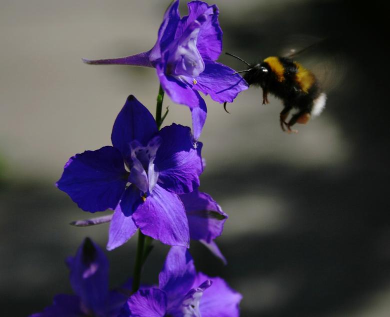 In de tuin -