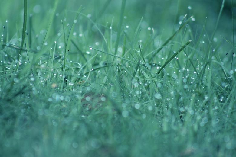 When Our Fingers Link Together - De blauwe gloed over de druppels in het gras, zoals de ochtend die deze verschijnselen leidt.