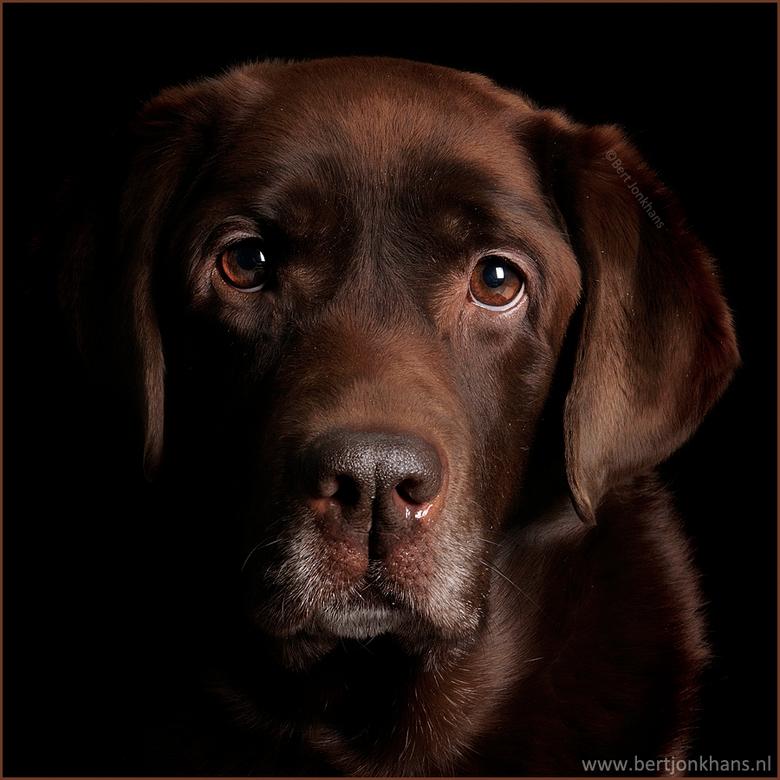 Millie - Één van mijn favoriete portretten van mijn hond Millie.