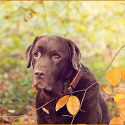 Hessel herfst