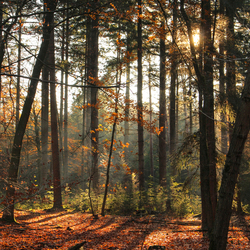 Sunbeam and trees