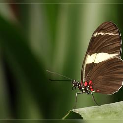 De vlinder-vallei