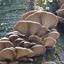 zwammen/paddenstoelen 05.01.2020
