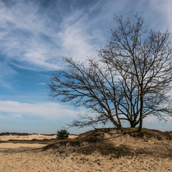 Hollandse landschap