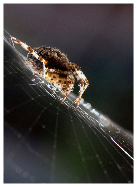 Spider moment -
