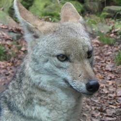 onderonsje met een vosje