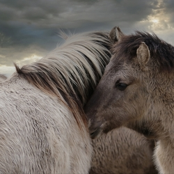 paardjes