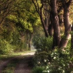 Een magische sfeer langs dit wandelpad