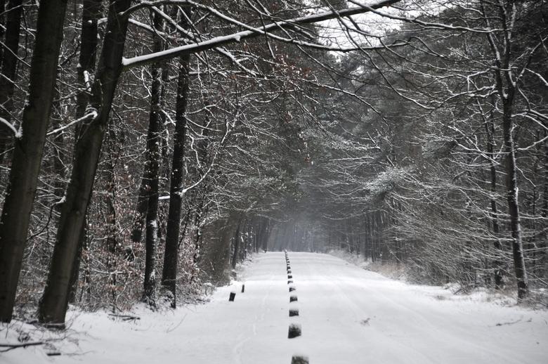 Grote Looweg. - Winter in Twickel.
