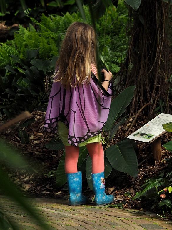 Vlindorado - vlindermeisje   - Zij was als vlinder meisje naar de vlindertuin