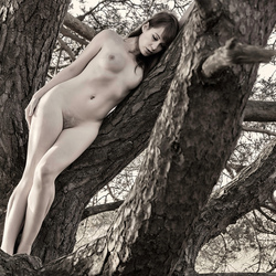 love for a tree
