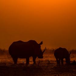 Mama and baby Rhino during sunset