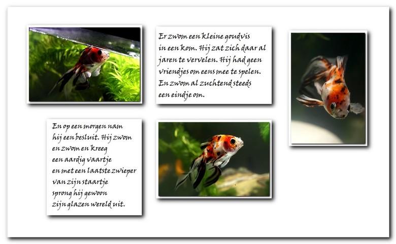 goudvis collage 2 - Na onze enthousiaste verhalen over onze goudvissen hebben we er nog eentje bij gekregen van kennissen die er zat van waren. '