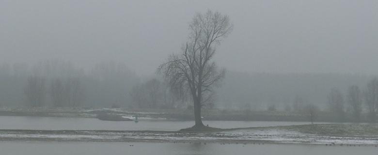 De Lek winterweer - Vrieskou en mist gaan samen op de Lekdijk nabij Vianen.