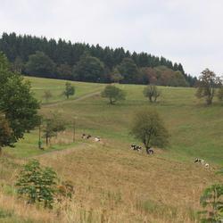 Sankt Andreasberg - net even buiten het dorp