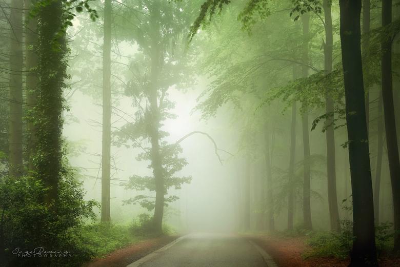 Magic is Real. - Nog een plaatje van afgelopen maandagochtend. Wat was het magisch in het bos! Ik heb er van 6 tot 11 uur 's ochtends rondgelopen