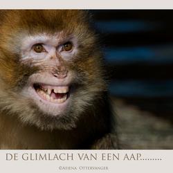 de glimlach van een aap...