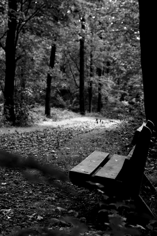 rustplaats - tijdens een wandeling in het bos dit verlaten bankje gespot