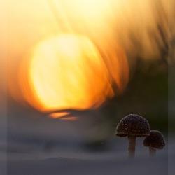 liefde is.....samen naar de zonsondergang kijken