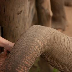 Nice to meet you, Mr Elephant