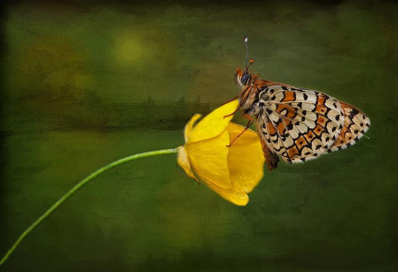 """Lente is onderweg? - De lente is onderweg,en de macro tijd laat op zich wachten......&quot;schilderen &quot;kan natuurlijk wel.....<img  src=""""/images/"""
