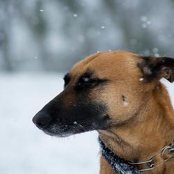 brrr sneeuw