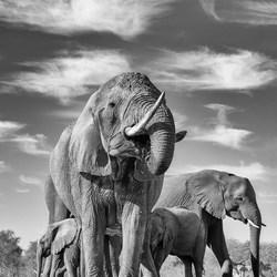 Olifanten komen drinken aan de waterpoel