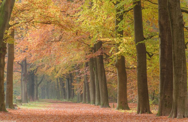 """De Herfst in zijn kleur en pracht - Ik kan er geen genoeg van krijgen de mooie herfst kleuren<img  src=""""/images/smileys/wilt.png""""/>. nog een of twee w"""