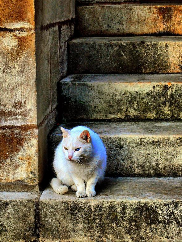 Straycat - Deze kat zat op de trap van een kathedraal in Frankrijk. Hij viel me op door zijn ogen, die verschillend van kleur zijn. <br />