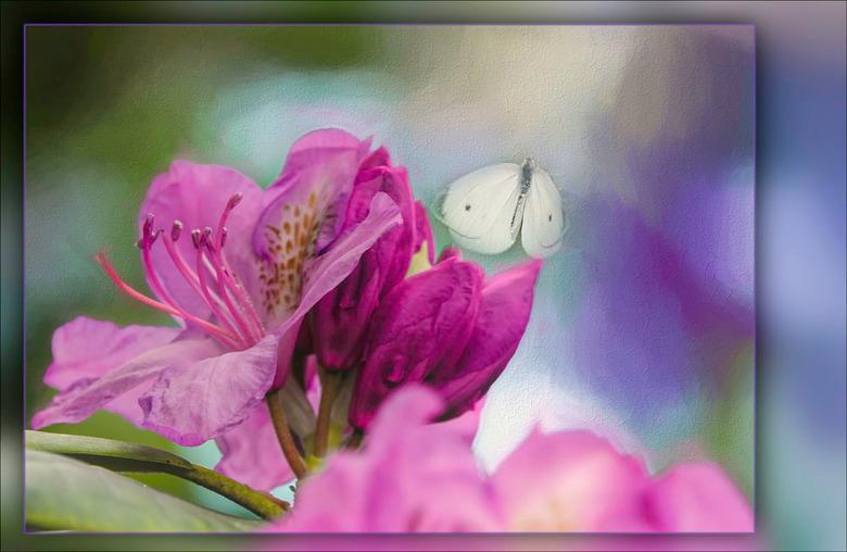 foto omgezet in schilderij.............. - vind ik zó leuk om te doen; komen m'n beide hobby's: vroeger schilderen en nu fotograferen, weer
