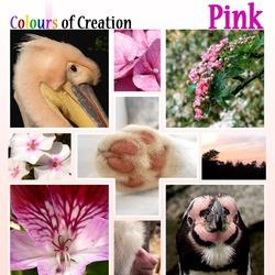 COC: Pink