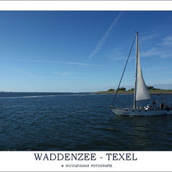 Texel VIII