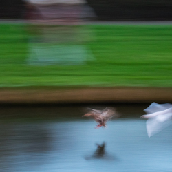 Abstracte eend en meeuw