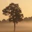 natuur Tys Damhuis  (81)