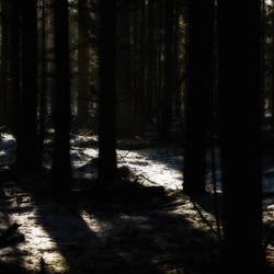 Plankenwambuis .2  Licht in de duisternis