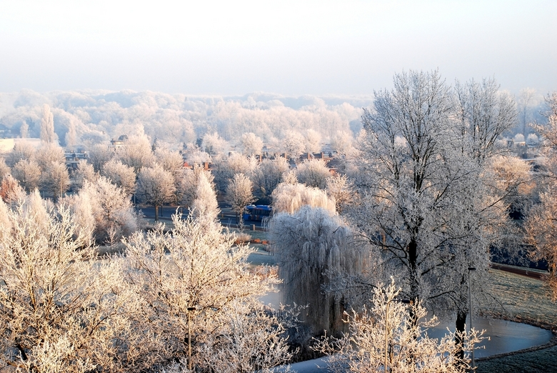 Witte toppen op bomen - Witte vorst toppen op bomen