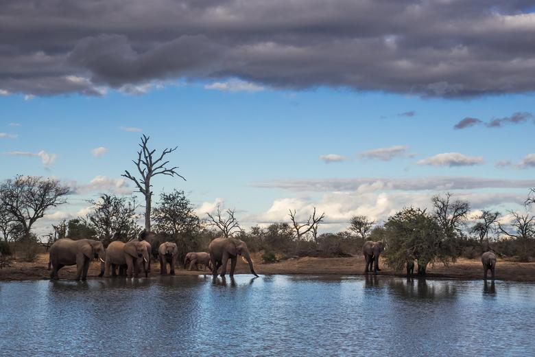 Verzamelen aan de drinkpoel - De schemer valt, de luchten kleuren van blauw naar purper en dan ineens verzamelen zich tientallen olifanten rond een dr