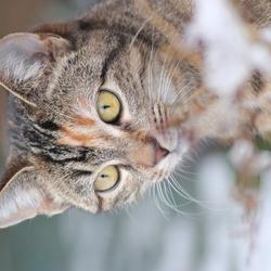 winterkat