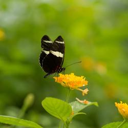 Vlinderparadijs Papiliorama