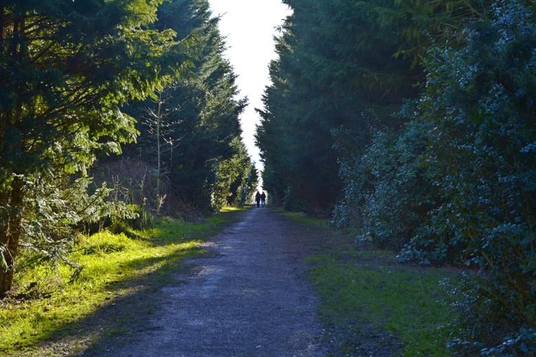 Twee wandelaars in een zonnig Westpark in Groningen.  - Twee wandelaars in Westpark in Groningen