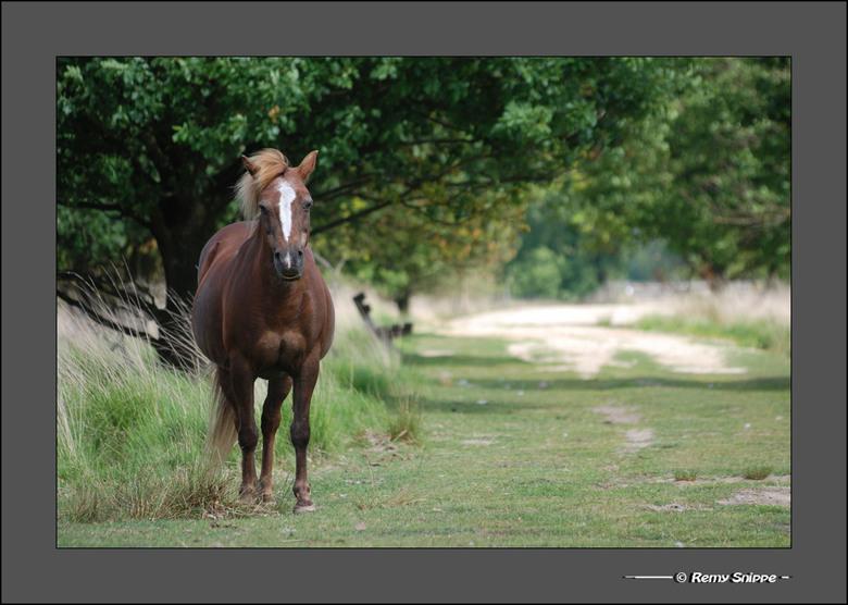 Paardebeeld - Hij stond zo stil dat het haast leek of het een beeld was midden in de natuur. Maar na een beetje aandacht trekken kwam dit paard wel wa