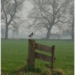 Weidevogels 2
