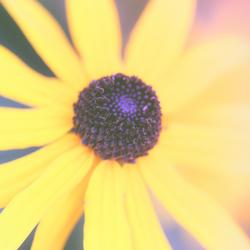 Soft Summer Glow (Super_Holland_Members)